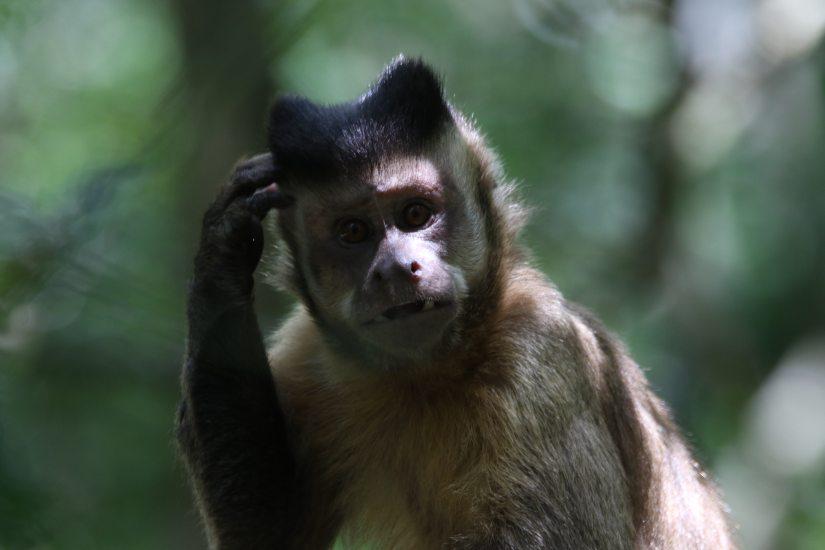 animal-ape-blur-767197