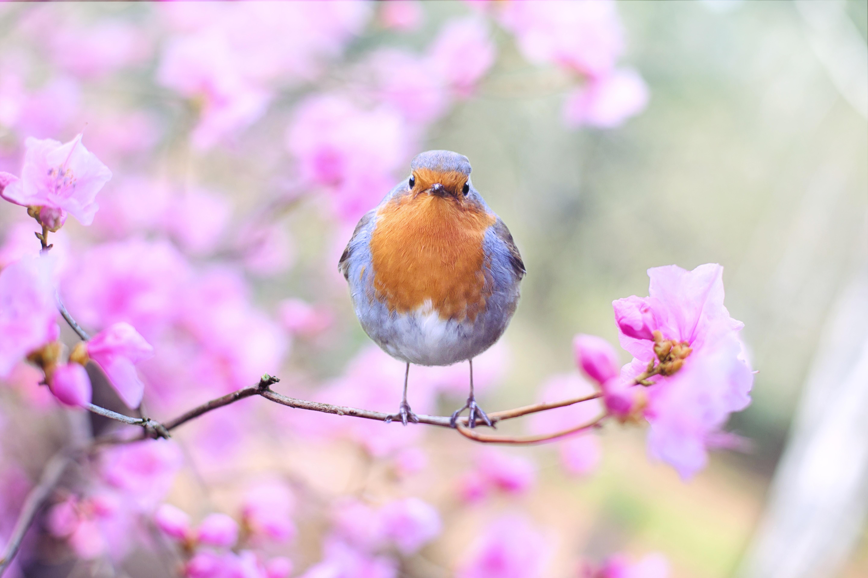 beautiful-bird-bloom-414181 (1)